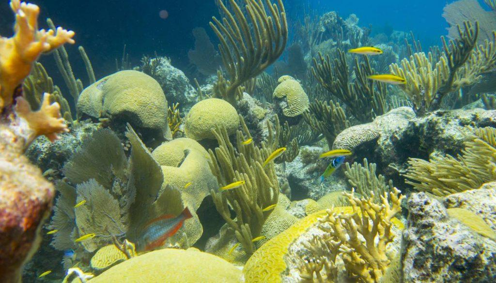 Bermuda - Coral Reef