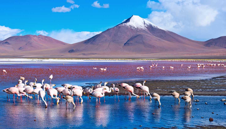 Bolivien - Think-Bolivia-LagunaColorada-514507946-Byelikova_Oksana-Copy