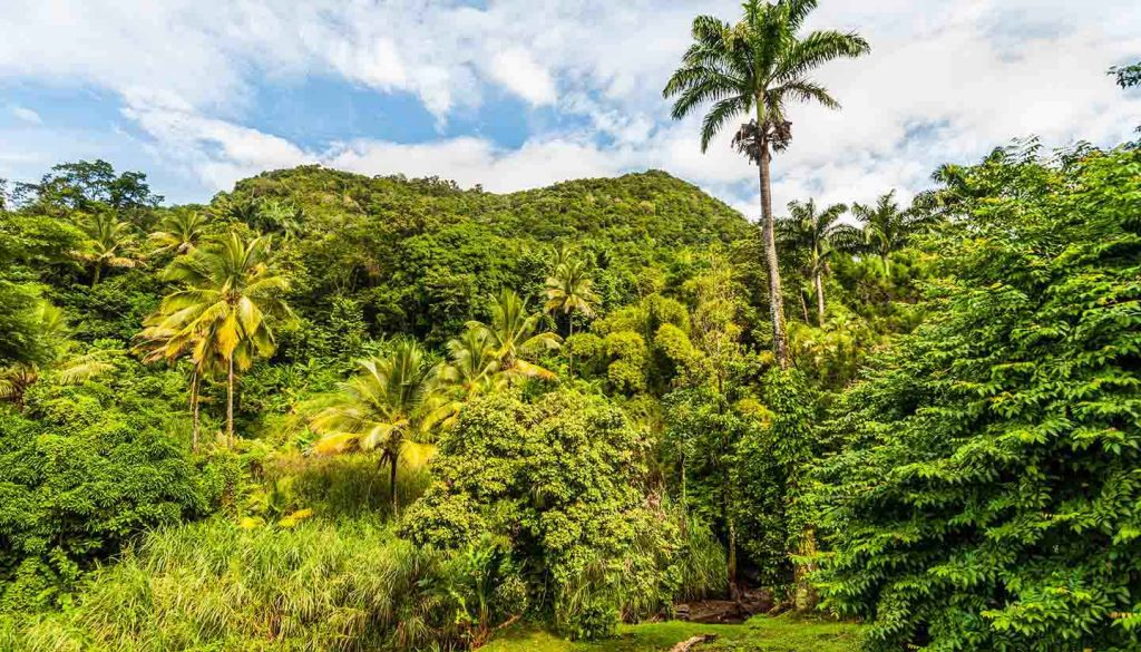 Dominica - Think-Dominica-Rainforest-517418749-vale_t-copy