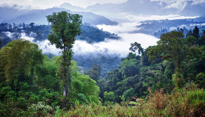 Ecuador - Rainforest