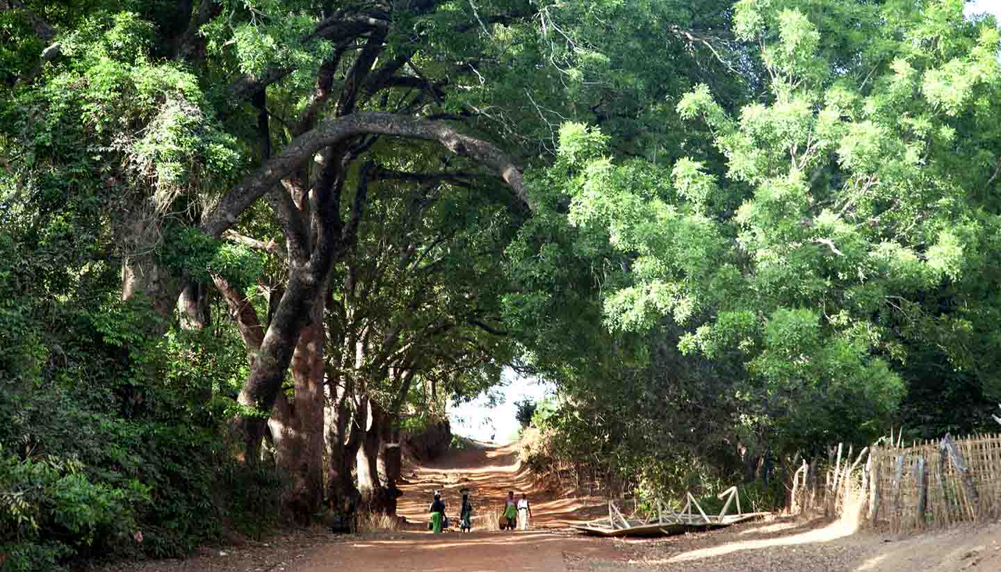 Guinea-Bissau - People walking on an african rural road and huge trees