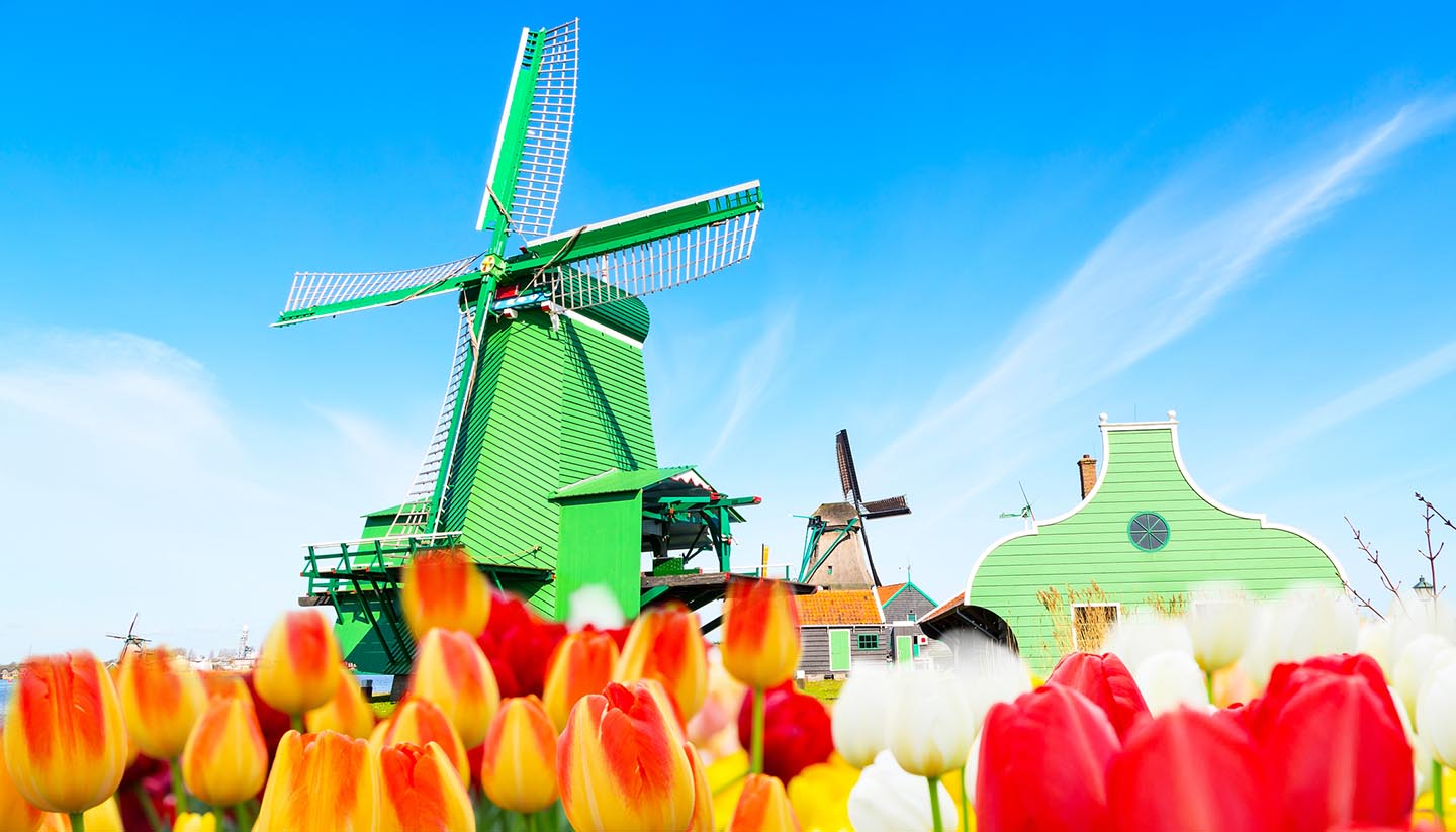 Niederlande - Holland background panorama with tulips and green windmill in traditional village in Holland