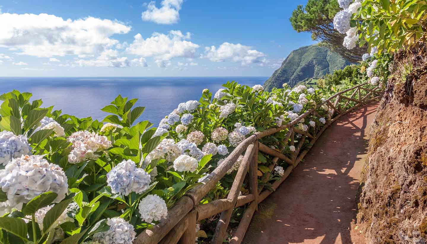 Azoren - Coastal path with hydrangea in Sao Miguel