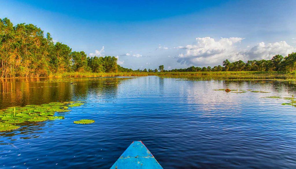 Suriname - Matapica Swamp