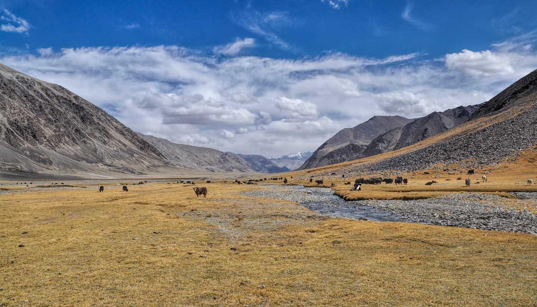Tadschikistan - Yaks in Tajikistan