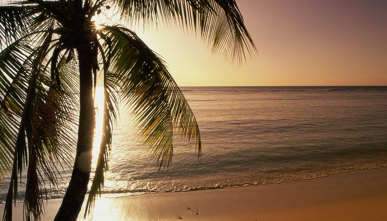 Trinidad und Tobago - Silhouette of a palm tree on a beach, Pigeon Point Beach, Tobago, Trinidad and Tobago