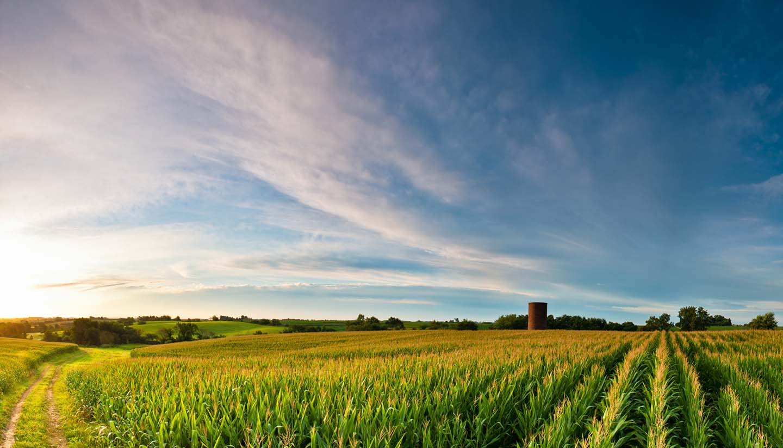 Iowa - Clouds over Corn