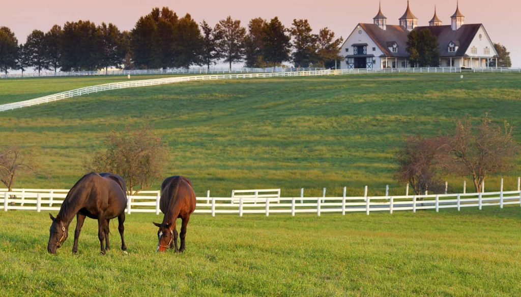 Kentucky - Horses on the Farm