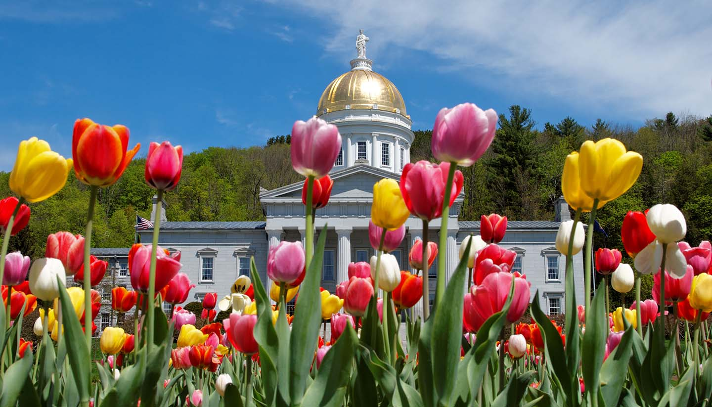 Vermont - Montpelier Capital building with Tulips