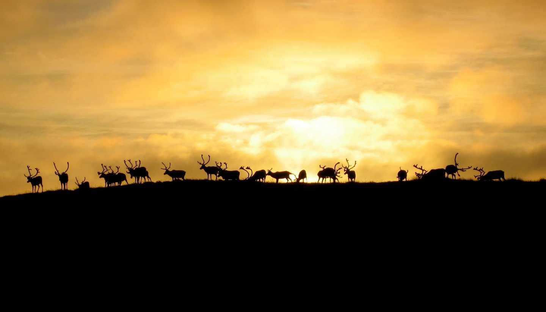 Norwegen - norways-nomads-life-sami-reindeer-herder