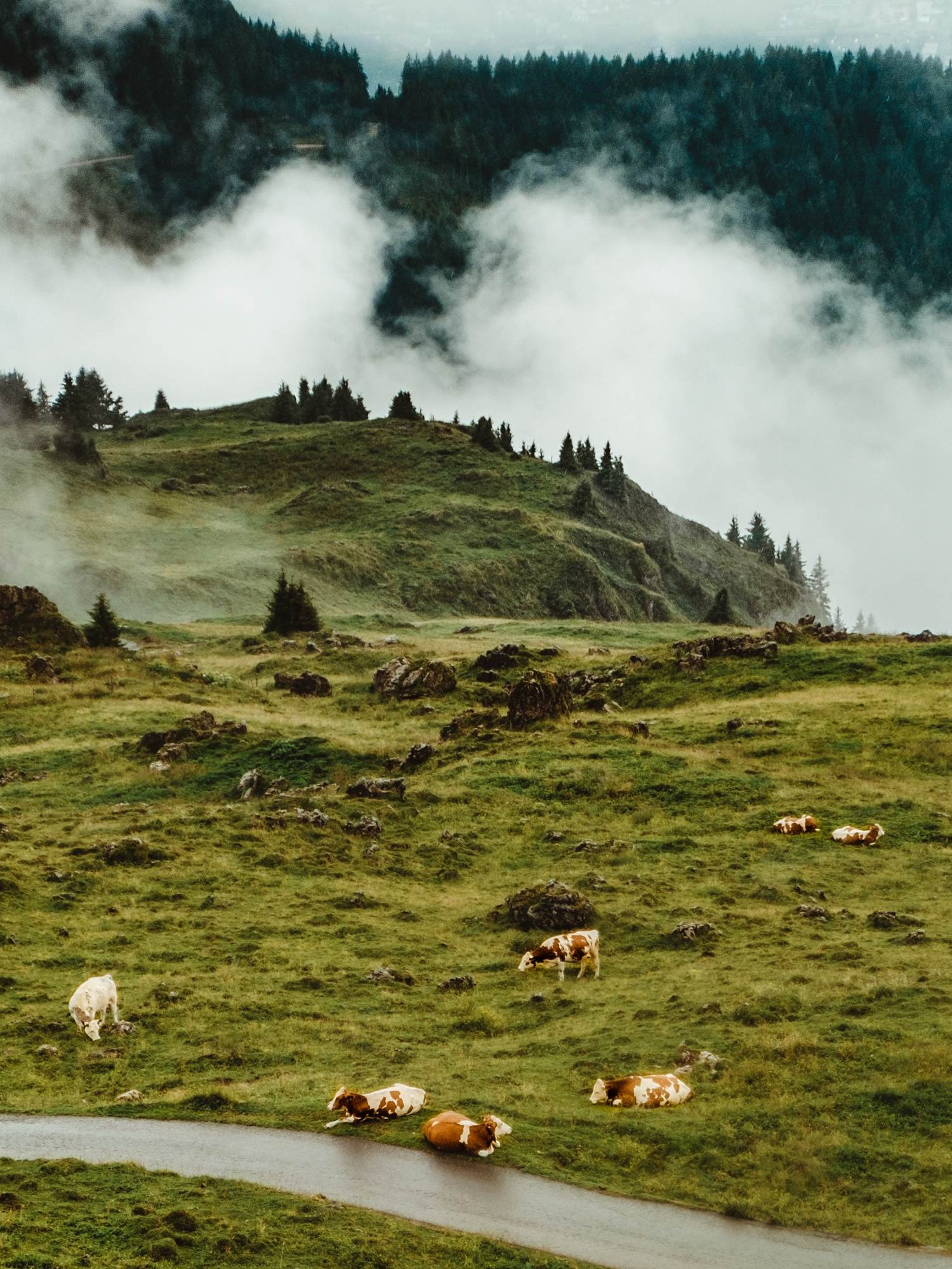 Bei spannenden Bergtouren, können Natur und Tiere hautnah erlebt werden.