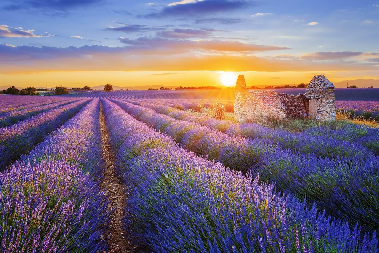 Sonnenuntergang über einem schönen lila Lavendelfeld in Valensole