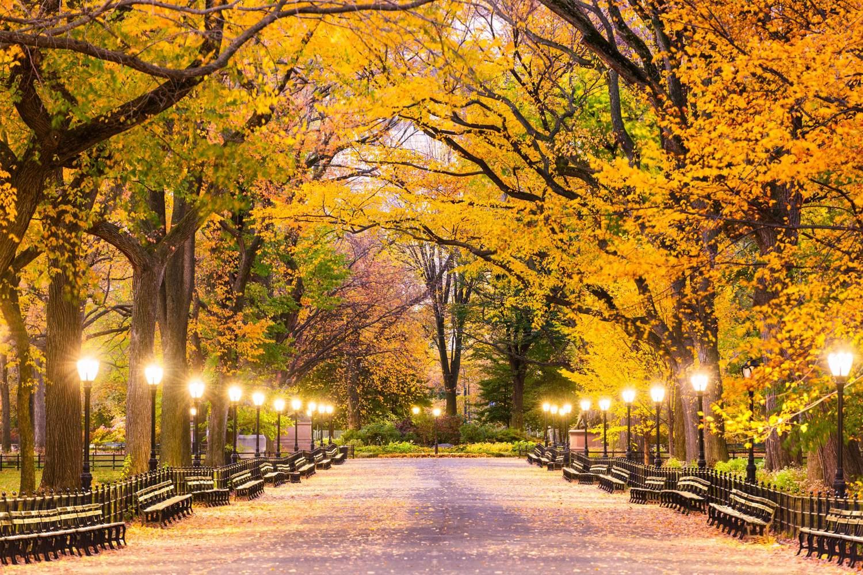 Der Central Park im Herbst